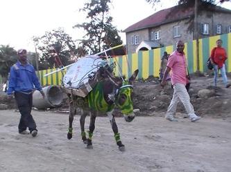 Henok Getachew 'Donkey-lobalization'